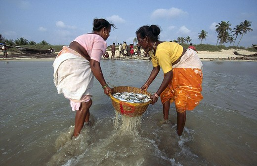 Two women washing fish in sea, Colva Beach, Goa, India : Stock Photo