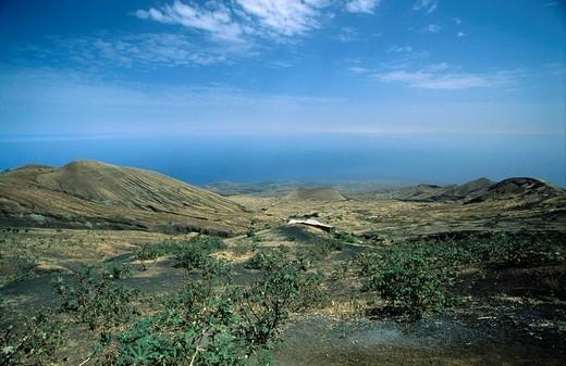 Plants on volcanic landscape, Fogo Island, Cape Verde Islands : Stock Photo