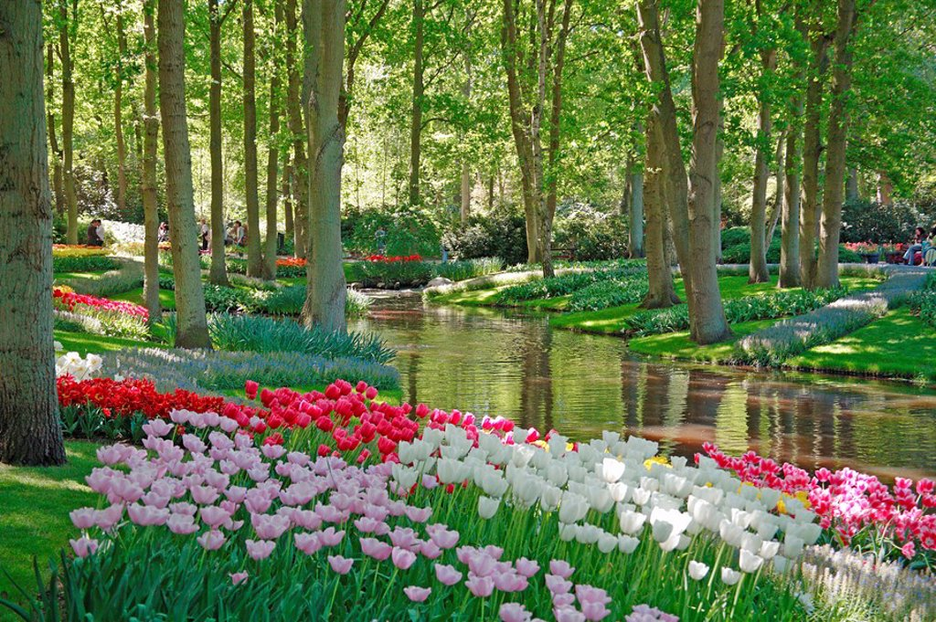 Stock Photo: 1841-58095 Flowers in bloom by pond in Keukenhof Gardens, Netherlands