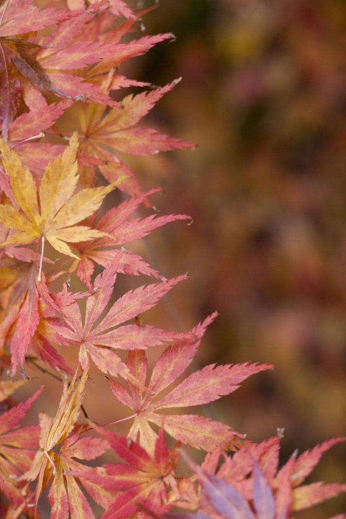 Autumn nature : Stock Photo