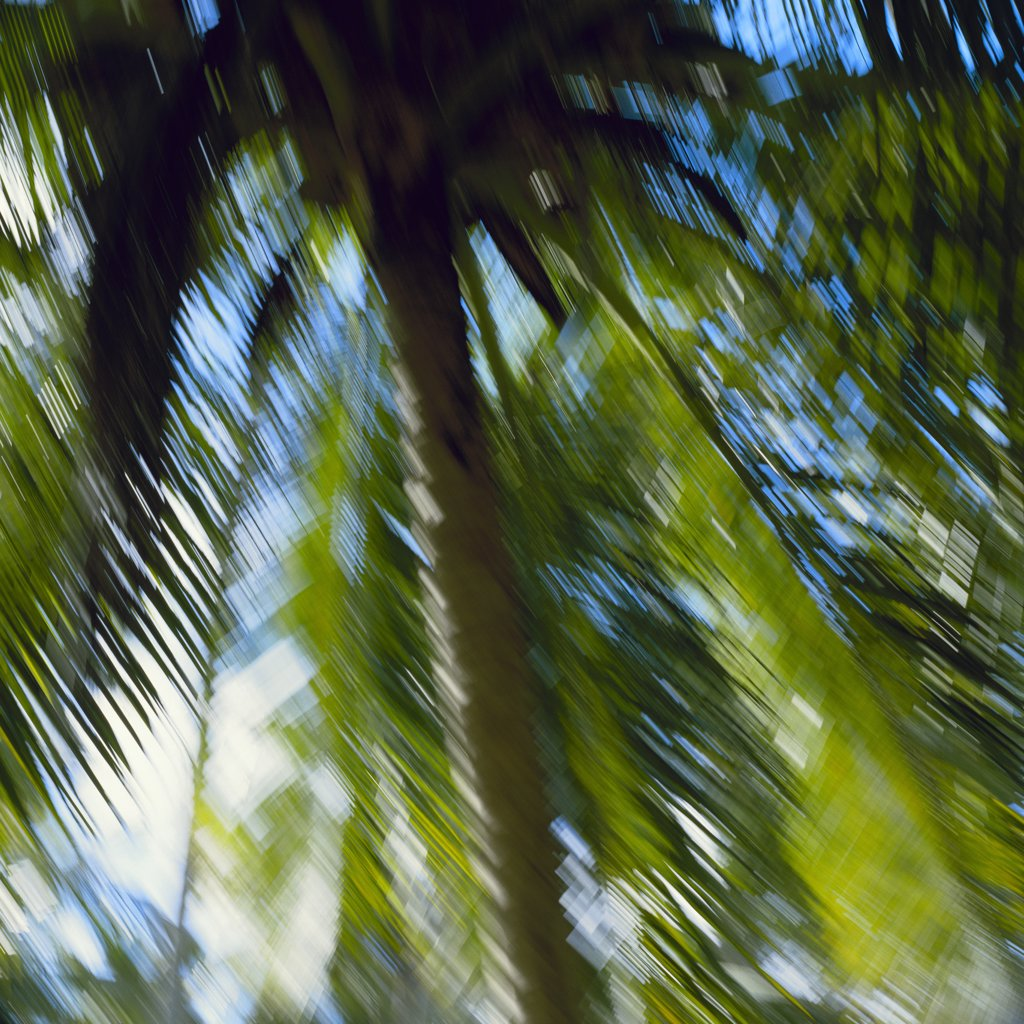 Palms in the wind : Stock Photo