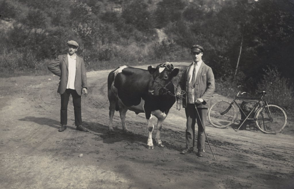 Historical picture of two farmer with a cow : Stock Photo