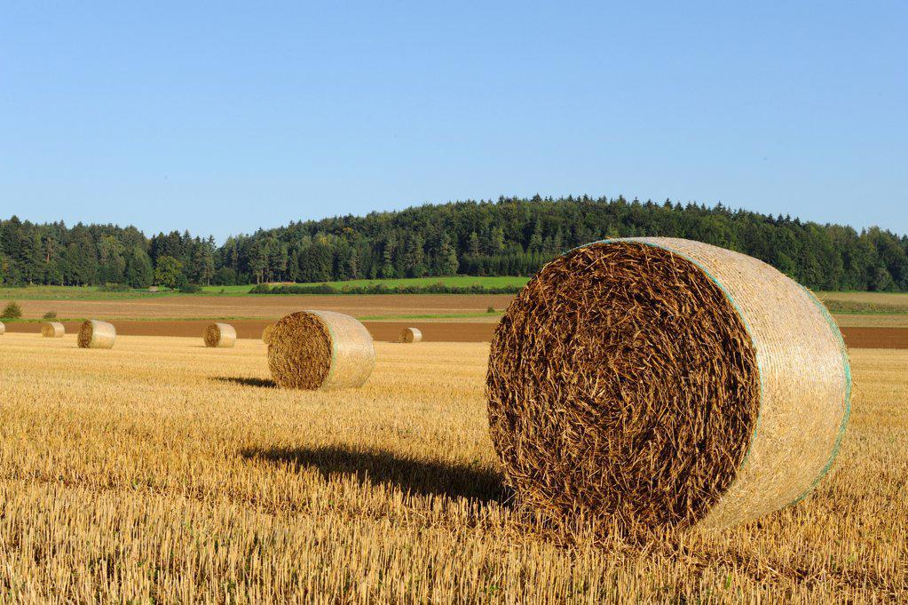 Bales of straw, Upper Palatinate, Bavaria, Germany, Europe : Stock Photo