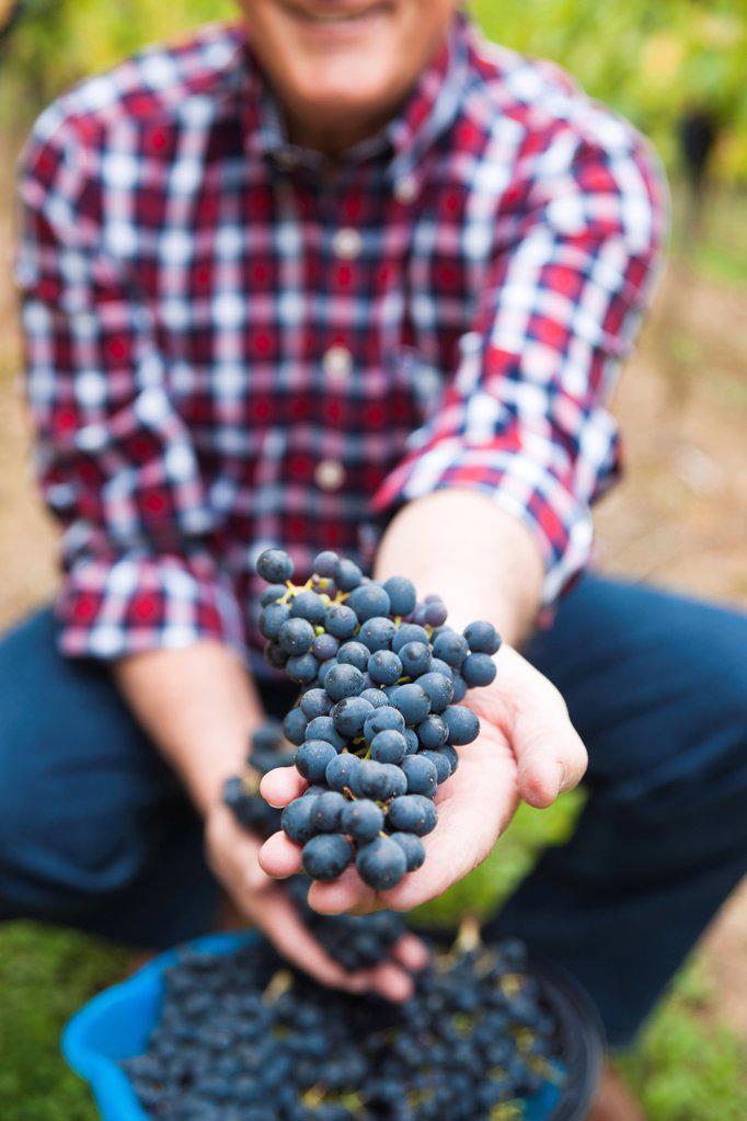 Stock Photo: 1841R-125055 Wingrower in wineyard