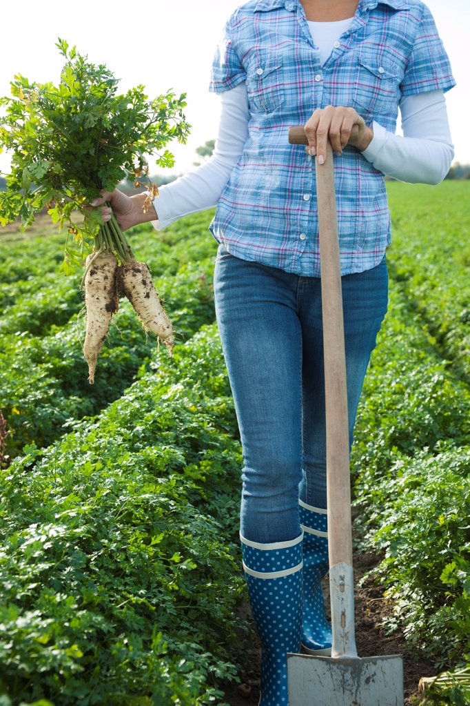 Stock Photo: 1841R-125109 Woman harvesting radish