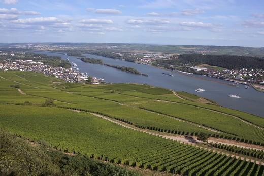 Blick vom Niederwalddenkmal ¸ber die Weinberge und den Inselrhein beim Weinort R¸desheim, Hessen, Deutschland, Europa, UNESCO Welterbe Mittelrheintal : Stock Photo
