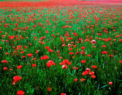 Flowers blooming in field : Stock Photo