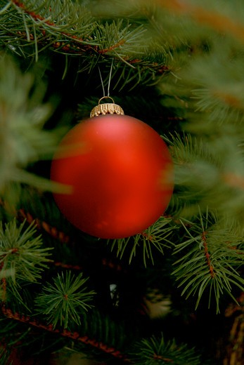 Stock Photo: 1841R-88680 Close-up of Christmas ornament hanging on tree