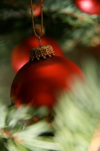 Close-up of Christmas ornaments hanging on tree : Stock Photo