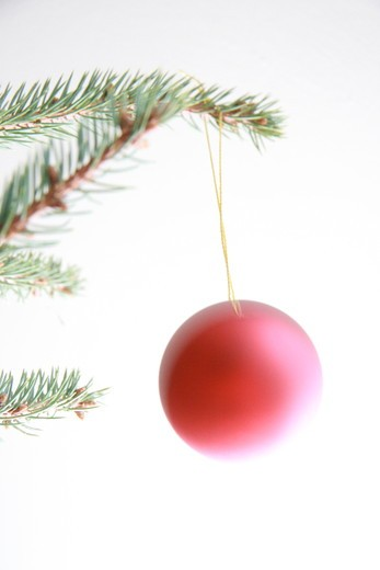 Close-up of Christmas ornament hanging on tree : Stock Photo
