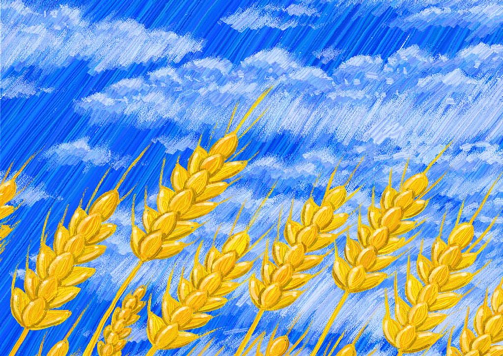Wheat against blue sky with white clouds : Stock Photo