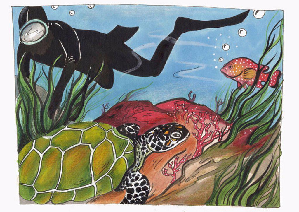 Scuba diver swimming alongside a sea turtle and fish : Stock Photo