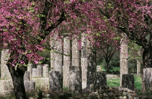 Peloponnese, Elia, Ancient Olympia Palaestra : Stock Photo