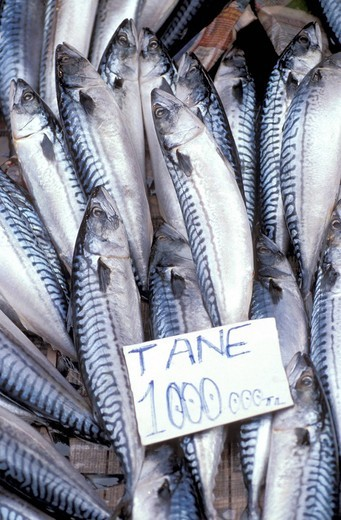 Mackerel for sale at the market , Istanbul, Turkey, Middle East , : Stock Photo
