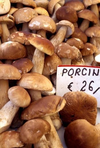 Italian porcini mushrooms at the market , Rome, Italy, Europe : Stock Photo