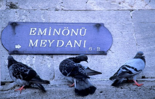 Pidgeons resting in Eminonu square , Istanbul, Turkey, Middle East , : Stock Photo
