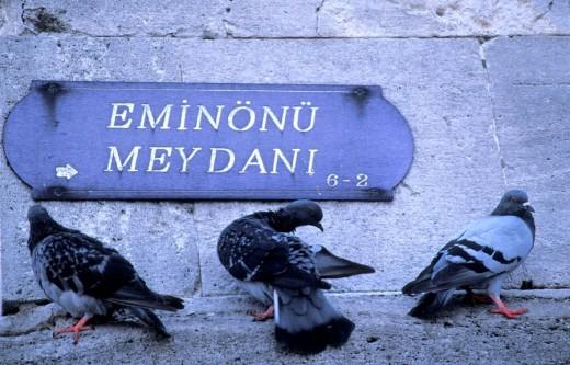 Stock Photo: 1844-5634 Pidgeons resting in Eminonu square , Istanbul, Turkey, Middle East ,