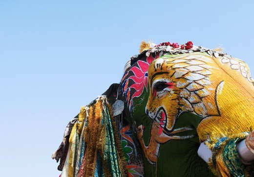 Image of a hunting lion painted on an elephant, Elephant Festival, Jaipur, Rajasthan, India : Stock Photo