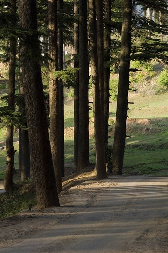 Stock Photo: 1846-5465 Dirt road in the forest, Patnitop, Jammu And Kashmir, India