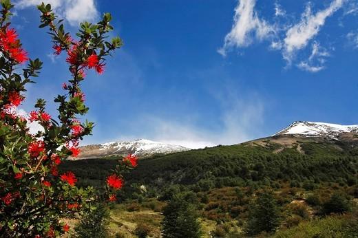 Notro, Torres del Peine National Park, Patagonien, Chile : Stock Photo