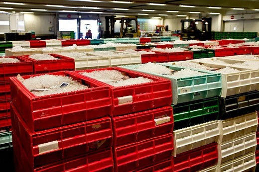 The Fish auction room in Hanstholm, Denmark : Stock Photo