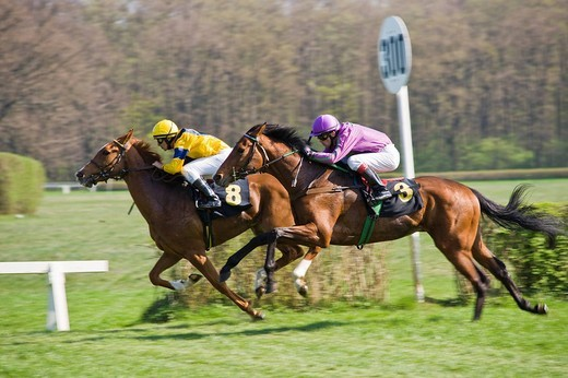Horse racing at the race tracks at Hoppegarten, Berlin, Germany, Europe : Stock Photo