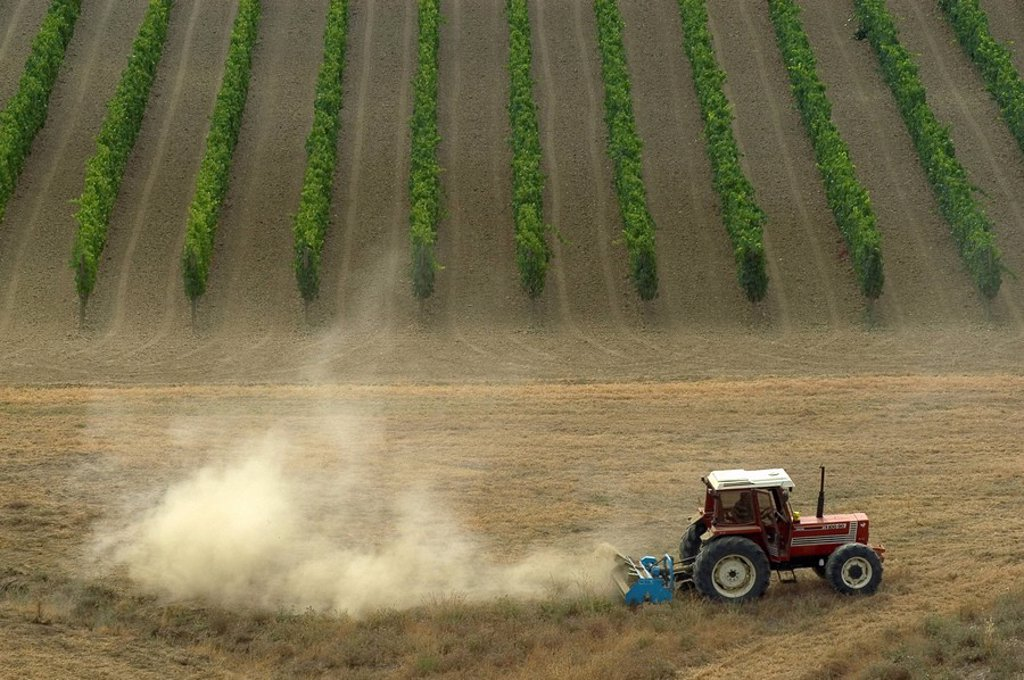 Stock Photo: 1848-113609 Tractor at field work in the vineyard, Tuscany, Italy