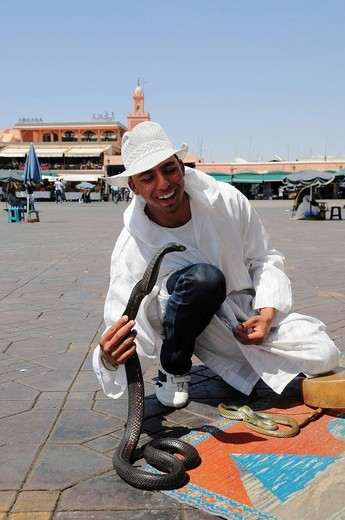 Snake charmer with cobra on Djemma el_Fna Square, Imposter Square or Square of the Hanged, Marrekesh, Morocco, Africa : Stock Photo