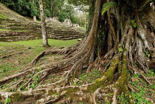 Maya site Yaxchilan, Selva Lacandona, Lakandonian Forest, Chiapas, Mexico : Stock Photo