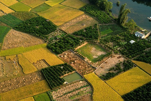Stock Photo: 1848-11551 Farmers at work in the rice fields at harvest time, aerial photograph of the field structure at rice harvest in Yangshuo, Guilin, Guanxi, China, Asia
