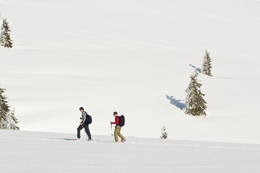 Stock Photo: 1848-116648 Snowshoe hikers, Feldberg, Black Forest, Baden_Wuerttemberg, Germany, Europe