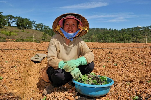 Women working in the field, Dalat, Central Highlands, Vietnam, Asia : Stock Photo