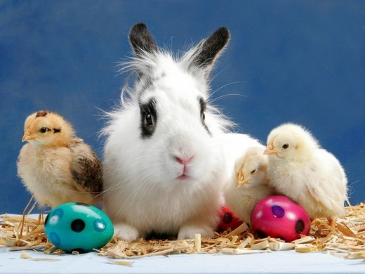 Chicken and Dwarf Rabbit with Easter Decoration : Stock Photo