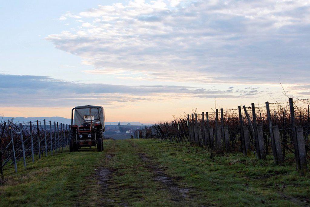 Stock Photo: 1848-119832 A winter´s night in the vineyards near Moerzheim, southern Palatinate region, Rhineland_Palatinate, Germany, Europe