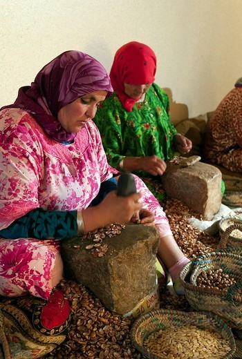 Stock Photo: 1848-122729 Production of Argan oil by Moroccan women, Morocco, Africa