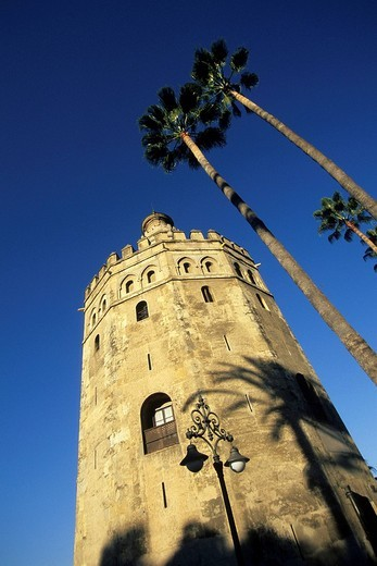 Stock Photo: 1848-122879 Torre del Oro, medieval gold tower between palm trees, now a Maritime Museum, Seville, Andalusia, Spain, Europe