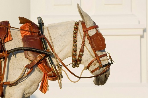 Stock Photo: 1848-125730 Portrait of an Andalusian donkey wearing traditional harness, Pentecost pilgrimage in El Rocio, Andalusia, Spain, Europe