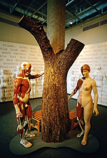 Anatomical male figure and naked female figure standing around a tree with an engraved heart, exhibit in the German Hygiene_Museum, Dresden, Saxony, Germany, Europe : Stock Photo
