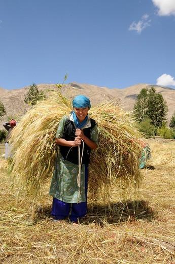 Stock Photo: 1848-130515 Ladakhi woman carrying the harvest to a farm near the Traktok monastery, Ladakh, India, Himalayas, Asia
