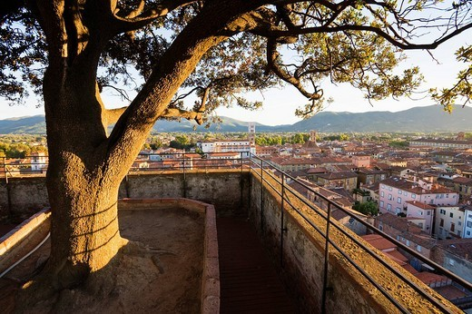 Stock Photo: 1848-130634 Lookout terrace on the Tower Torre Guinigi overlooking Lucca, Tuscany, Italy