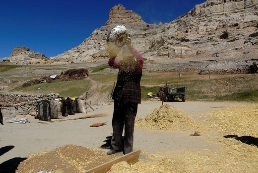 Tibetan woman sifting barley by hand, Sutley Canon, Province of Ngari, Tibet, China, Asia : Stock Photo