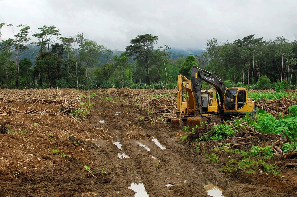 Stock Photo: 1848-139825 Wood clearing, Palmar Norte, Puntarenas, Costa Rica, Central America