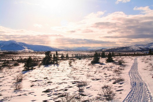 Stock Photo: 1848-143564 Trail in Winter landscape, tundra, plateau, sled tracks, Yukon Territory, Canada