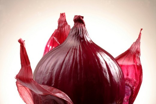 Stock Photo: 1848-144344 Red onion