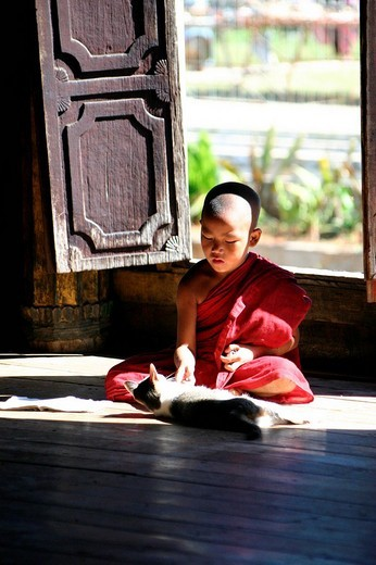 Stock Photo: 1848-147489 Young Buddhist monk playing with cat, Burma Myanmar, Southeast Asia