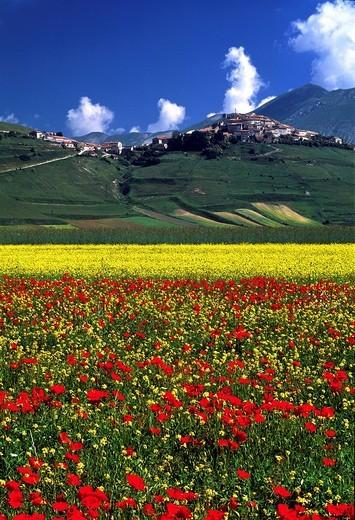 Stock Photo: 1848-148288 Castelluccio in the early summer in Piano Grande, Italy, Europe