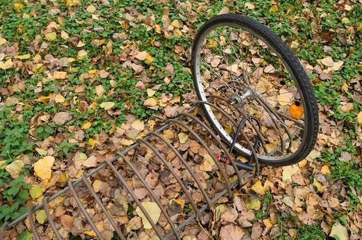 A single wheel : Stock Photo