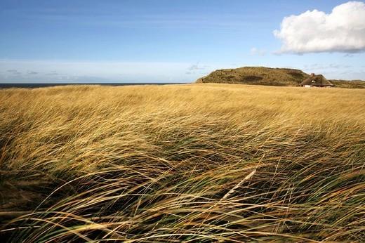 DEU, Germany : North Sea island Sylt : Stock Photo