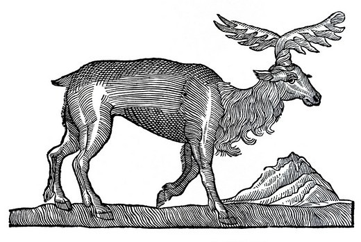 Stock Photo: 1848-152264 Woodcut, Elk Alces, Conrad Gesner, Historia Animalium, 1551, Renaissance