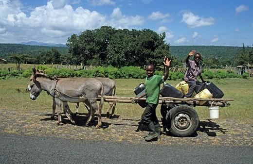 Donkey cart, Kenya, Africa : Stock Photo